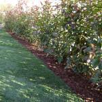 Cordoli giardino