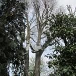Potature alberi ad alto fusto