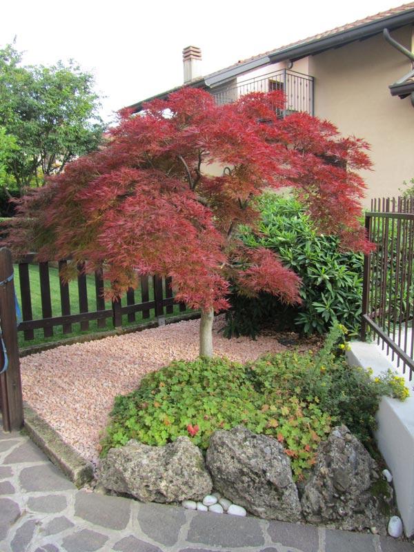 Servizi professionali di giardinaggio rivolti a clienti privati aziende e condomini ed enti - Alberi ornamentali per giardino ...