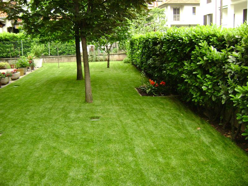 Alberi per piccoli giardini idea creativa della casa e - Alberi da giardino piccoli ...