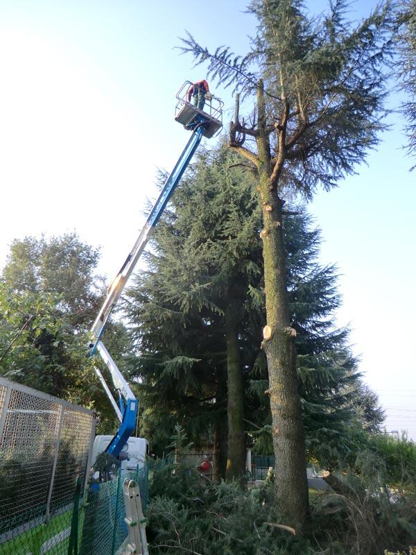 Piante Alto Fusto : Potatura alberi ad alto fusto servizio di taglio piante
